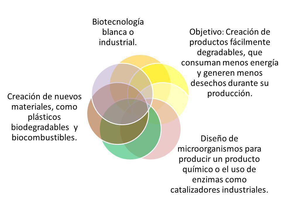 Biotecnología blanca o industrial. Objetivo : Creación de productos fácilmente degradables, que consuman menos energía y generen menos desechos durant