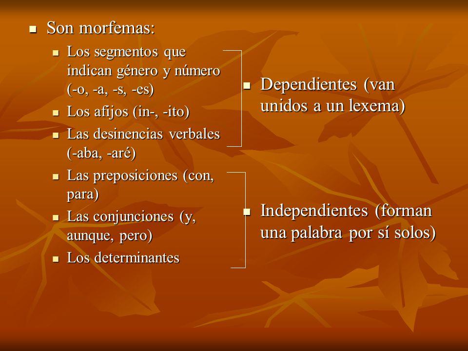 Son morfemas: Son morfemas: Los segmentos que indican género y número (-o, -a, -s, -es) Los segmentos que indican género y número (-o, -a, -s, -es) Lo