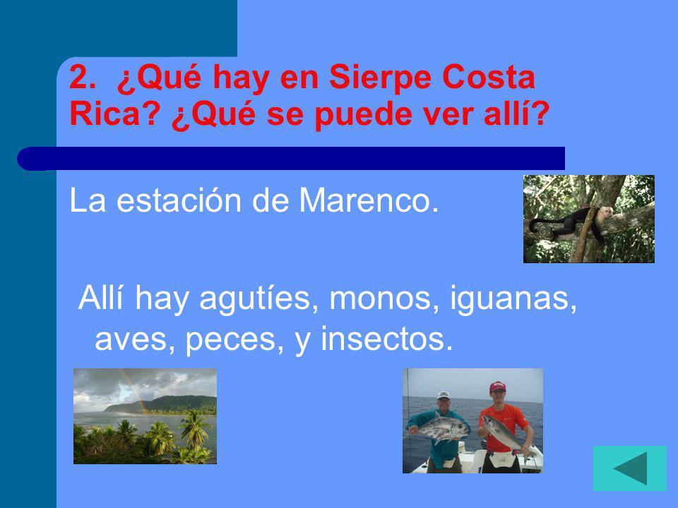 2.¿Qué hay en Sierpe Costa Rica. ¿Qué se puede ver allí.