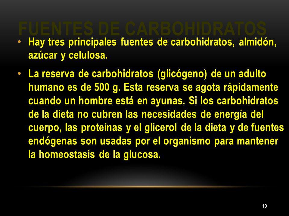 FUENTES DE CARBOHIDRATOS 19 Hay tres principales fuentes de carbohidratos, almidón, azúcar y celulosa. La reserva de carbohidratos (glicógeno) de un a