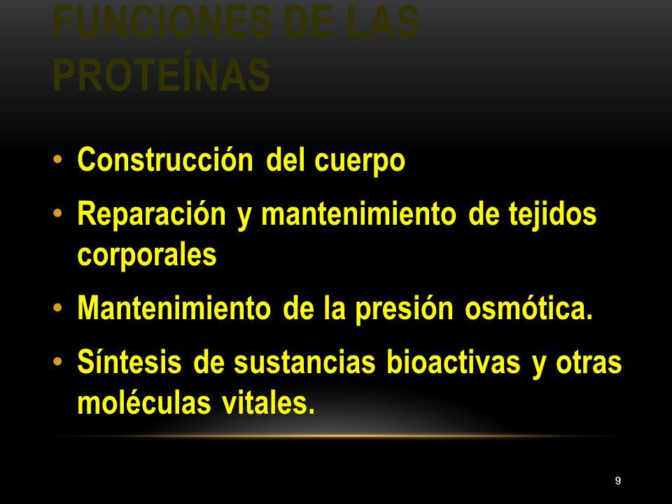 FUNCIONES DE LAS PROTEÍNAS 9 Construcción del cuerpo Reparación y mantenimiento de tejidos corporales Mantenimiento de la presión osmótica. Síntesis d