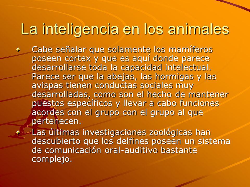 La inteligencia en los animales Cabe señalar que solamente los mamíferos poseen cortex y que es aquí donde parece desarrollarse toda la capacidad inte