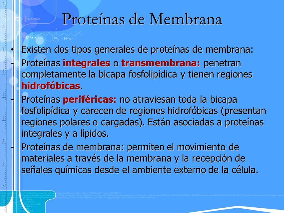 Existen dos tipos generales de proteínas de membrana: Existen dos tipos generales de proteínas de membrana: -Proteínas integrales o transmembrana: pen