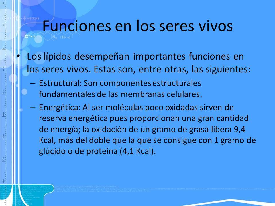 Funciones en los seres vivos Los lípidos desempeñan importantes funciones en los seres vivos. Estas son, entre otras, las siguientes: – Estructural: S