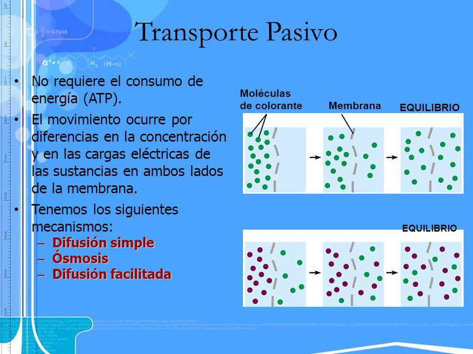 Transporte Pasivo No requiere el consumo de energía (ATP). El movimiento ocurre por diferencias en la concentración y en las cargas eléctricas de las