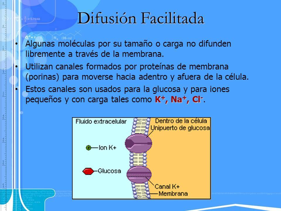 Algunas moléculas por su tamaño o carga no difunden libremente a través de la membrana. Utilizan canales formados por proteínas de membrana (porinas)