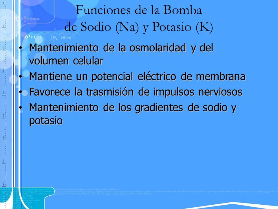Funciones de la Bomba de Sodio (Na) y Potasio (K) Mantenimiento de la osmolaridad y del volumen celular Mantenimiento de la osmolaridad y del volumen