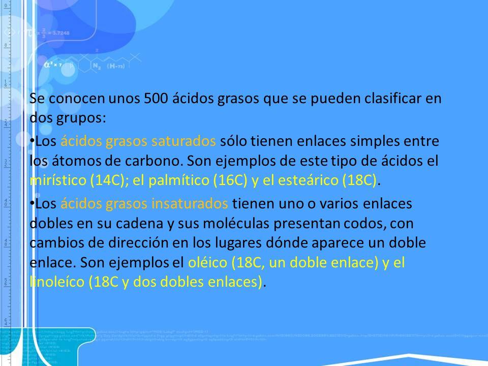 Se conocen unos 500 ácidos grasos que se pueden clasificar en dos grupos: Los ácidos grasos saturados sólo tienen enlaces simples entre los átomos de