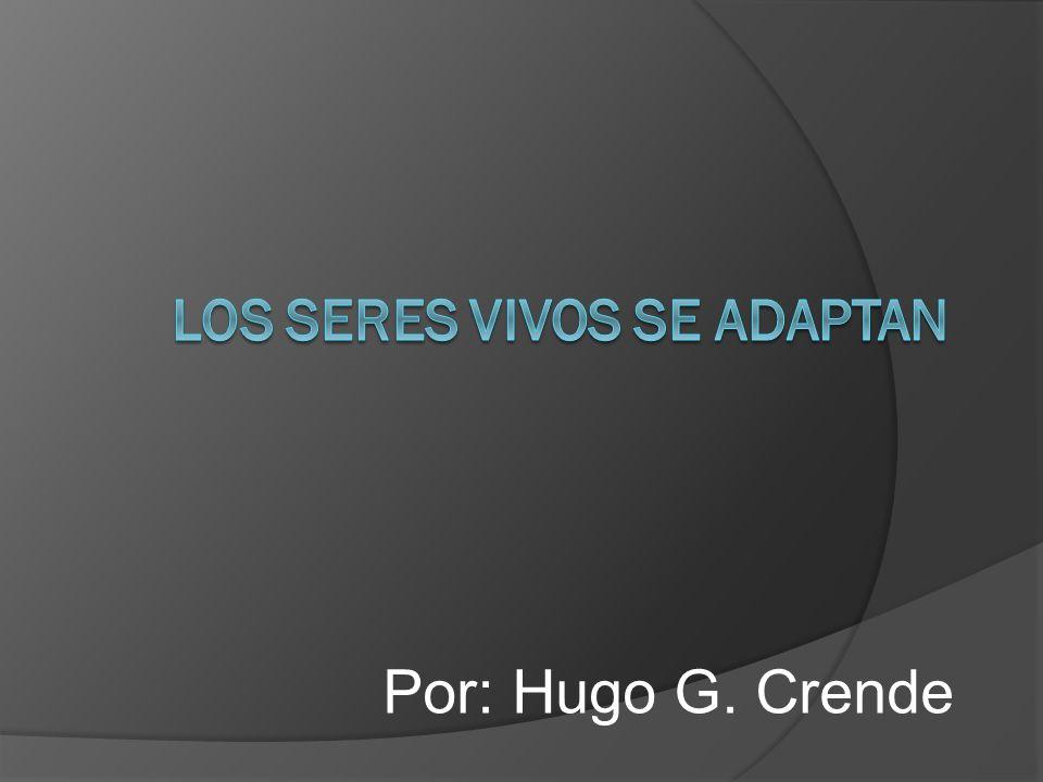 Por: Hugo G. Crende