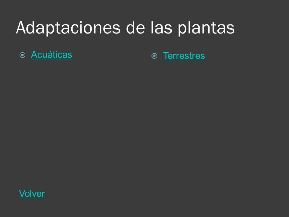 Adaptaciones de las plantas Acuáticas Volver Terrestres