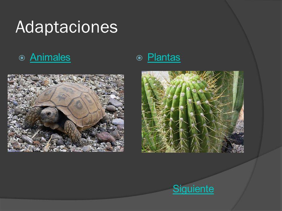 Adaptaciones Animales Plantas Siguiente