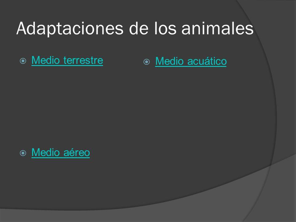Adaptaciones de los animales Medio terrestre Medio aéreo Medio acuático
