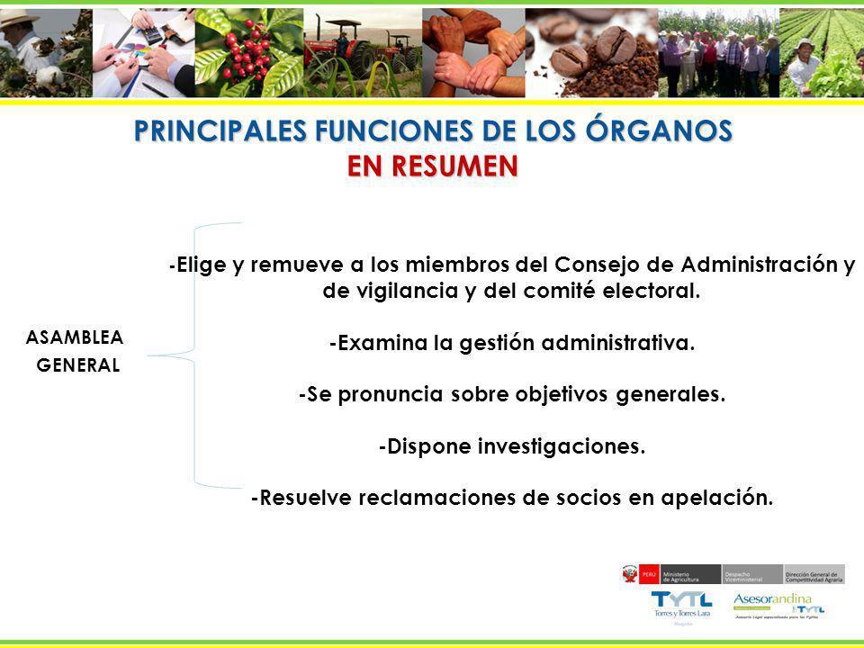 PRINCIPALES FUNCIONES DE LOS ÓRGANOS EN RESUMEN ASAMBLEA GENERAL - Aprueba y modifica el Estatuto. - Elige y remueve a los miembros del Consejo de Adm