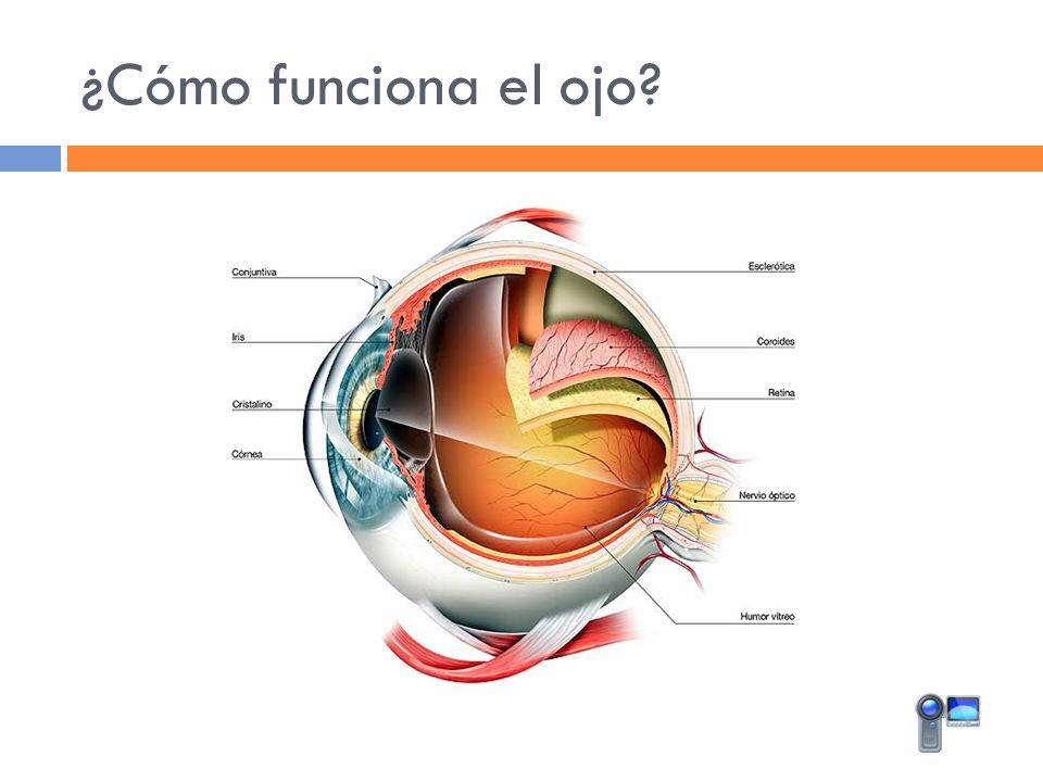 ¿Cómo funciona el ojo?