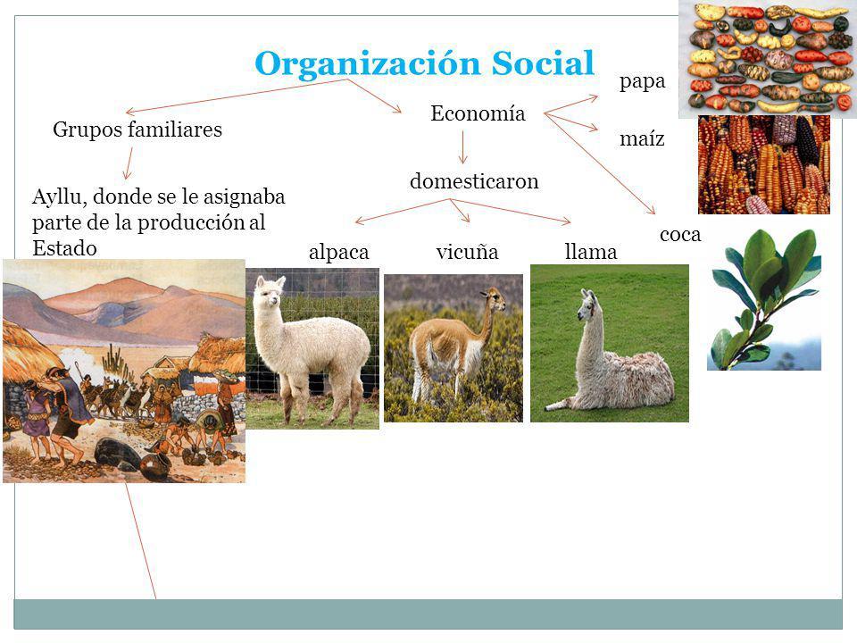 Organización Social Grupos familiares Ayllu, donde se le asignaba parte de la producción al Estado Economía domesticaron alpacavicuñallama papa maíz c