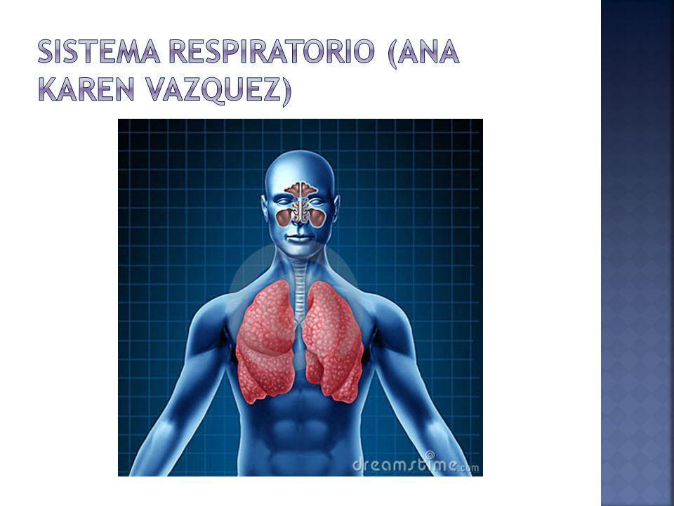 La función del Sistema Respiratorio es incorporar oxígeno al organismo; para que al llegar a la célula se produzca la combustión y poder así quemar los nutrientes y liberar energía.