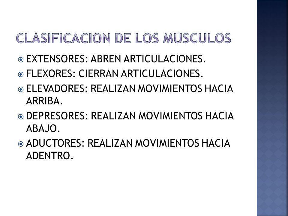 EXTENSORES: ABREN ARTICULACIONES. FLEXORES: CIERRAN ARTICULACIONES. ELEVADORES: REALIZAN MOVIMIENTOS HACIA ARRIBA. DEPRESORES: REALIZAN MOVIMIENTOS HA
