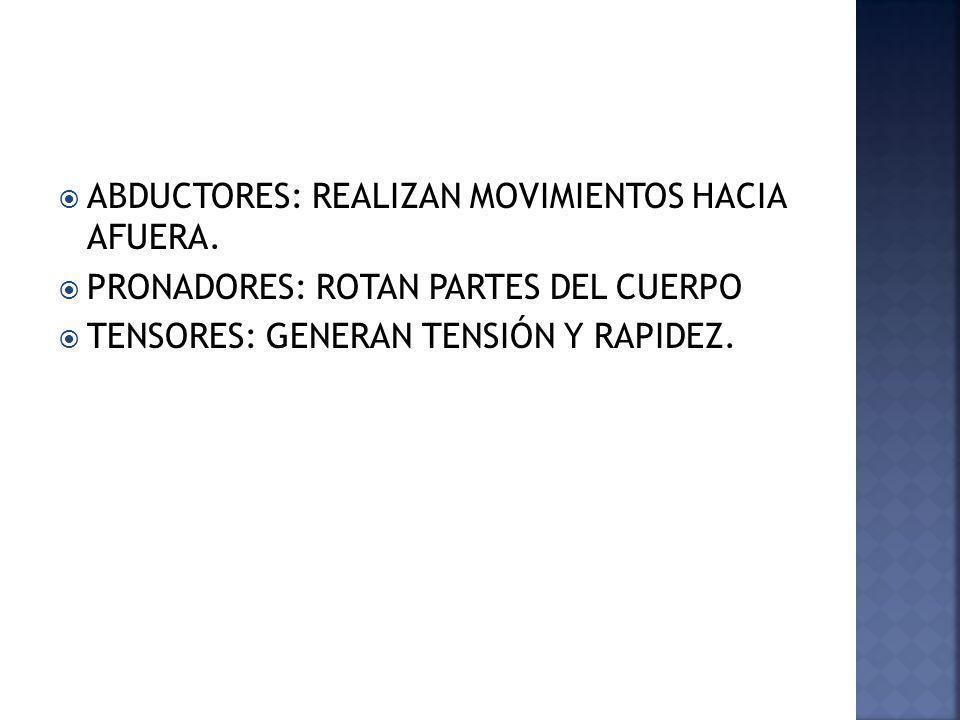ABDUCTORES: REALIZAN MOVIMIENTOS HACIA AFUERA. PRONADORES: ROTAN PARTES DEL CUERPO TENSORES: GENERAN TENSIÓN Y RAPIDEZ.