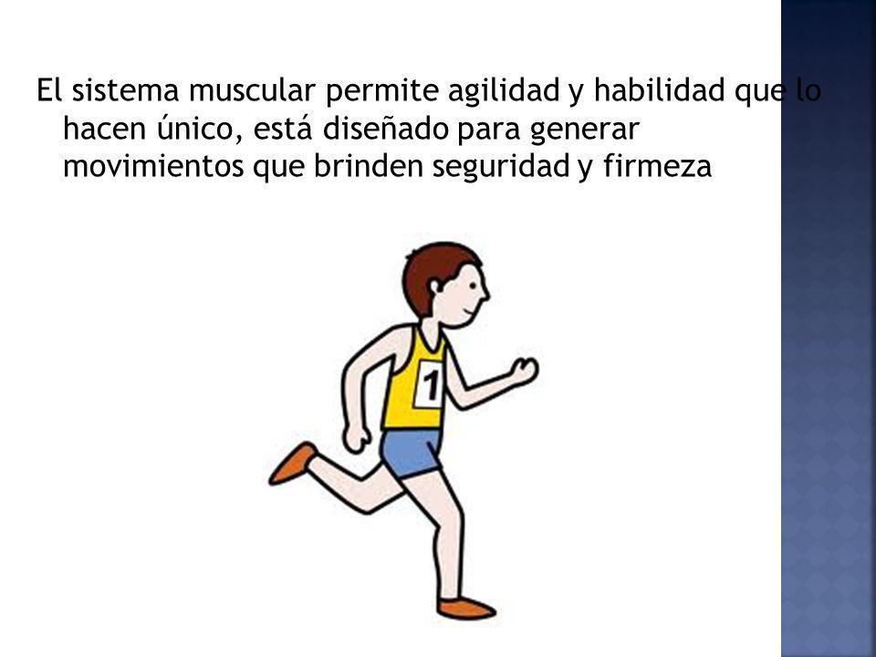 Algunas enfermedades y dolencias que afectan al sistema muscular son: Desgarro: ruptura del tejido muscular.