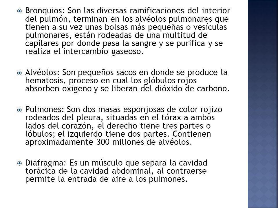 ESQUEMA RESPIRATORIO MARI ALEX ALMONTE MEJIA