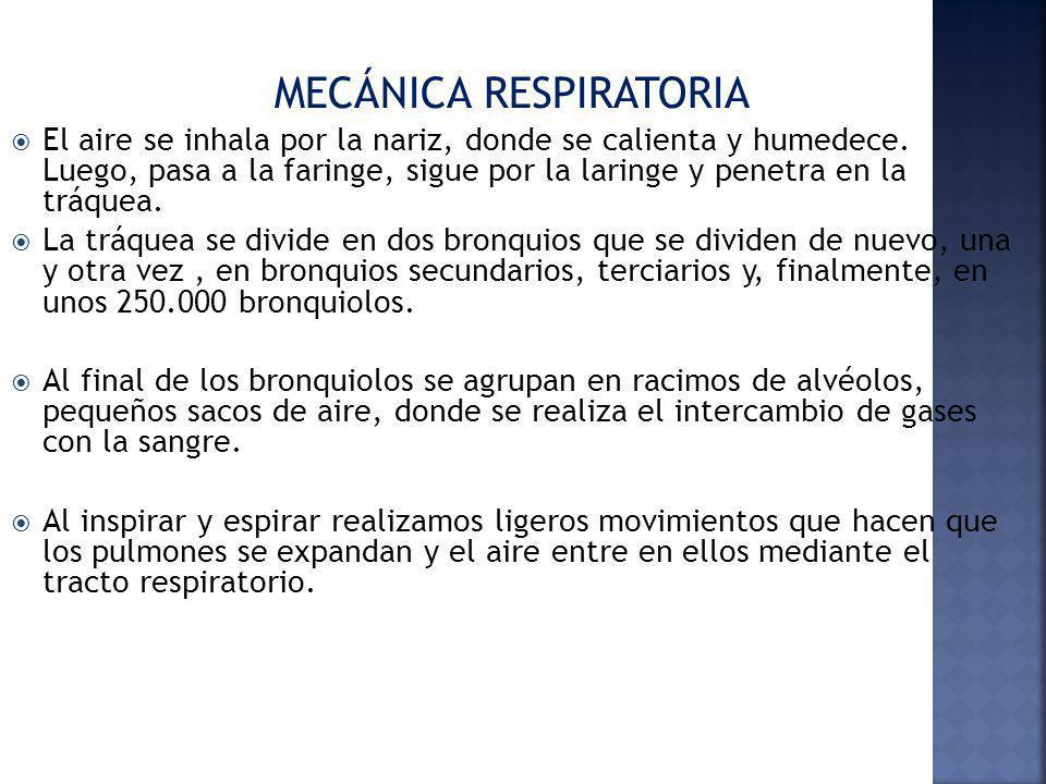 MECÁNICA RESPIRATORIA El aire se inhala por la nariz, donde se calienta y humedece. Luego, pasa a la faringe, sigue por la laringe y penetra en la trá