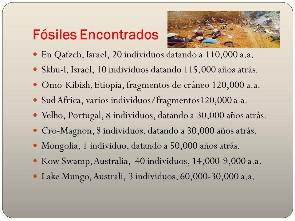 Fósiles Encontrados En Qafzeh, Israel, 20 individuos datando a 110,000 a.a. Skhu-l, Israel, 10 individuos datando 115,000 años atrás. Omo-Kibish, Etio