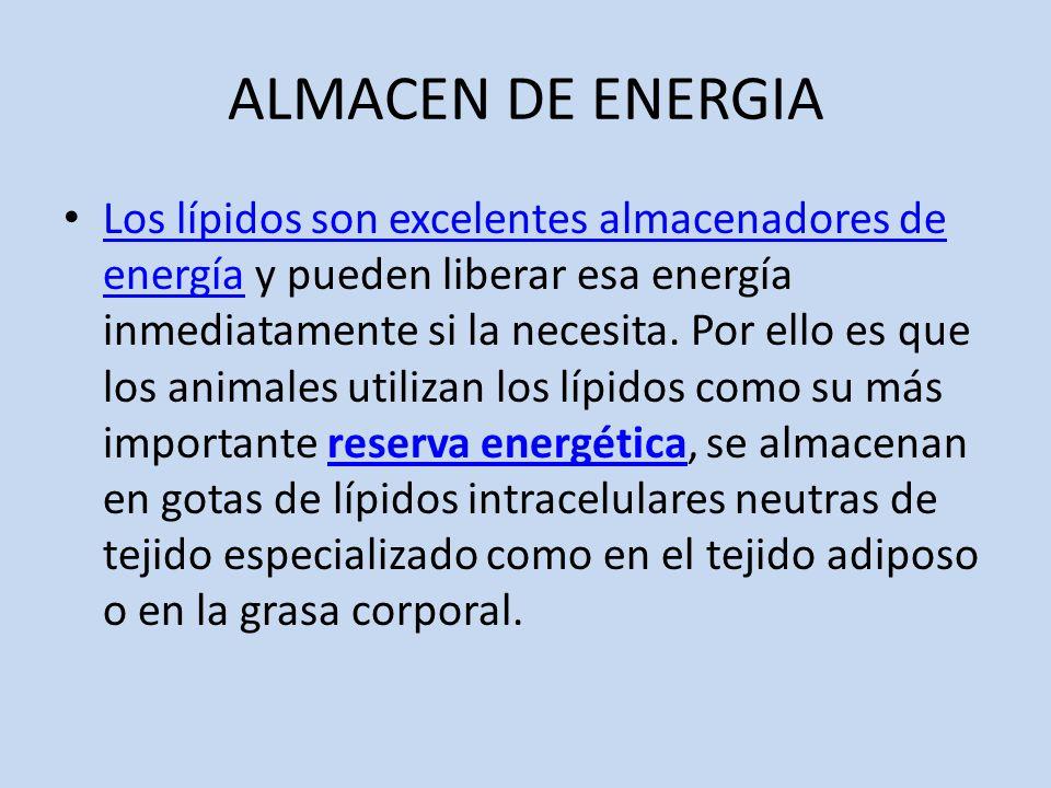 ALMACEN DE ENERGIA Los lípidos son excelentes almacenadores de energía y pueden liberar esa energía inmediatamente si la necesita.