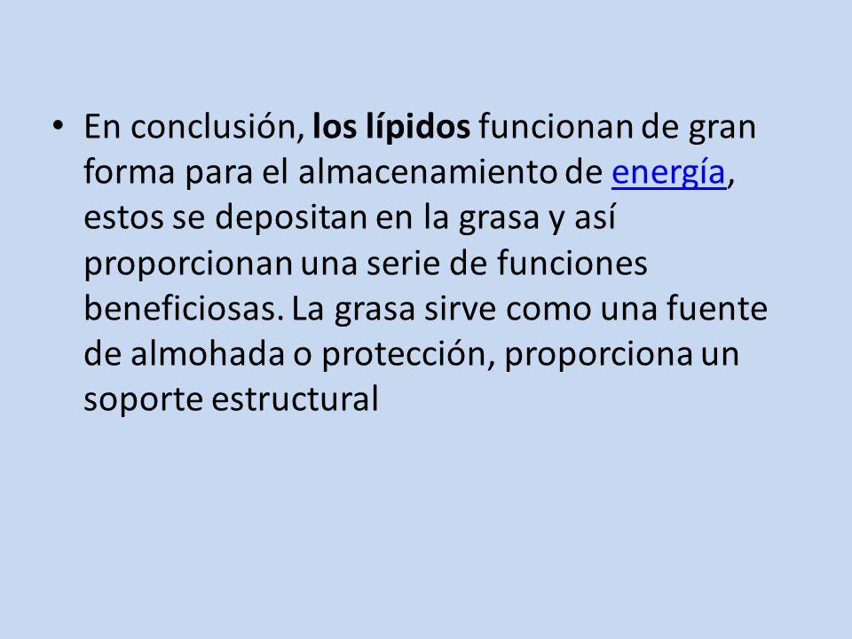 En conclusión, los lípidos funcionan de gran forma para el almacenamiento de energía, estos se depositan en la grasa y así proporcionan una serie de funciones beneficiosas.
