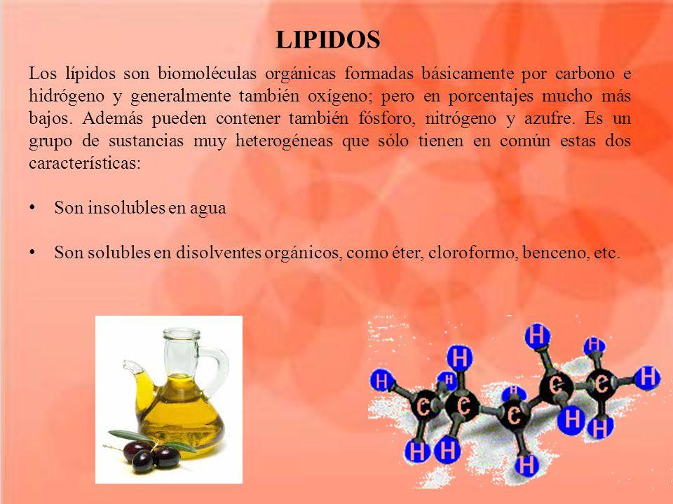 Los lípidos son biomoléculas orgánicas formadas básicamente por carbono e hidrógeno y generalmente también oxígeno; pero en porcentajes mucho más bajos.