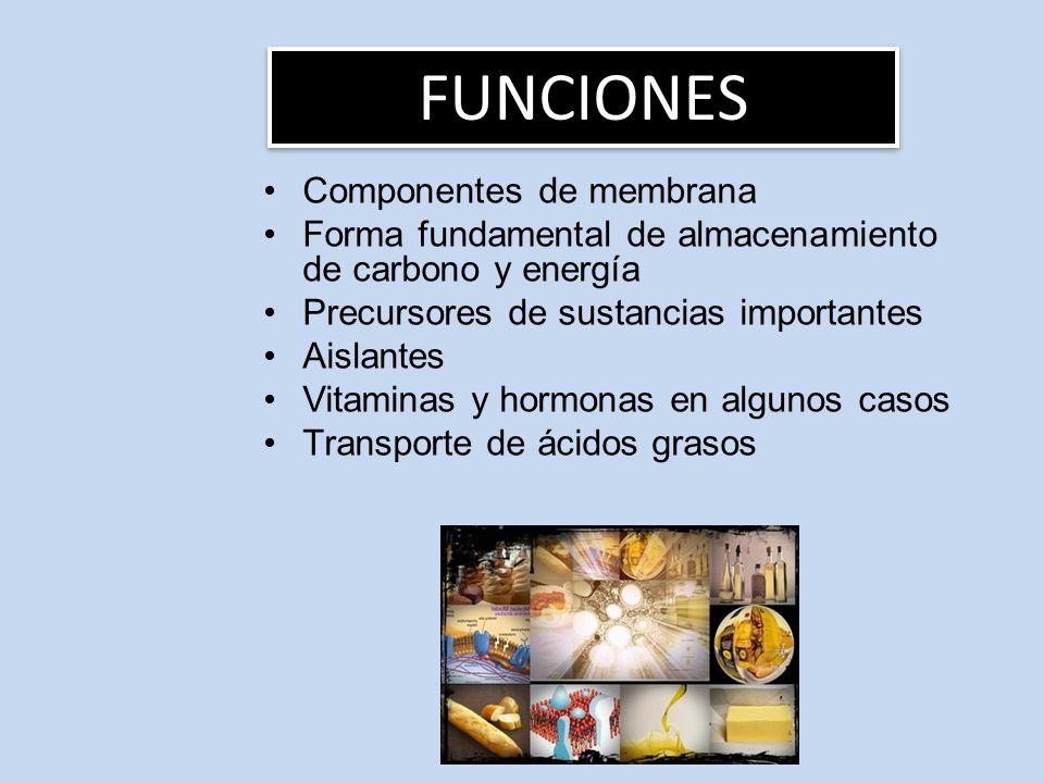 Componentes de membrana Forma fundamental de almacenamiento de carbono y energía Precursores de sustancias importantes Aislantes Vitaminas y hormonas en algunos casos Transporte de ácidos grasos FUNCIONES