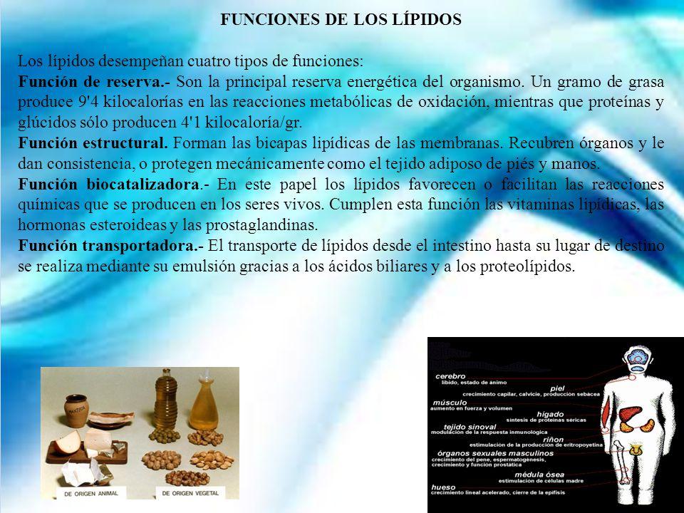 FUNCIONES DE LOS LÍPIDOS Los lípidos desempeñan cuatro tipos de funciones: Función de reserva.- Son la principal reserva energética del organismo.