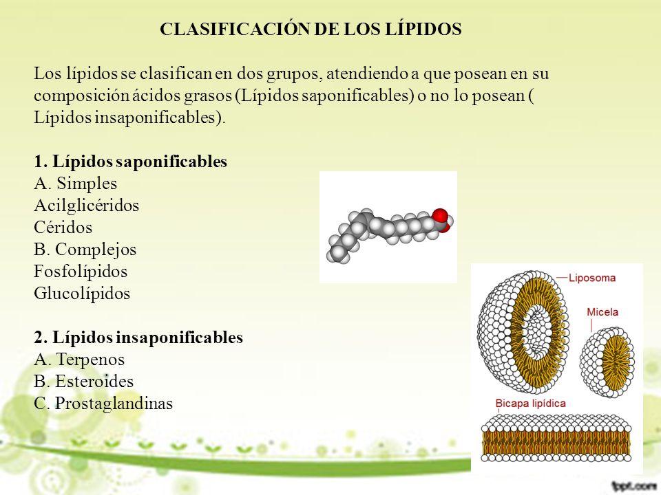 CLASIFICACIÓN DE LOS LÍPIDOS Los lípidos se clasifican en dos grupos, atendiendo a que posean en su composición ácidos grasos (Lípidos saponificables) o no lo posean ( Lípidos insaponificables).