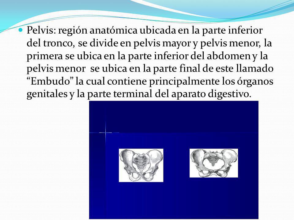Pelvis: región anatómica ubicada en la parte inferior del tronco, se divide en pelvis mayor y pelvis menor, la primera se ubica en la parte inferior del abdomen y la pelvis menor se ubica en la parte final de este llamado Embudo la cual contiene principalmente los órganos genitales y la parte terminal del aparato digestivo.