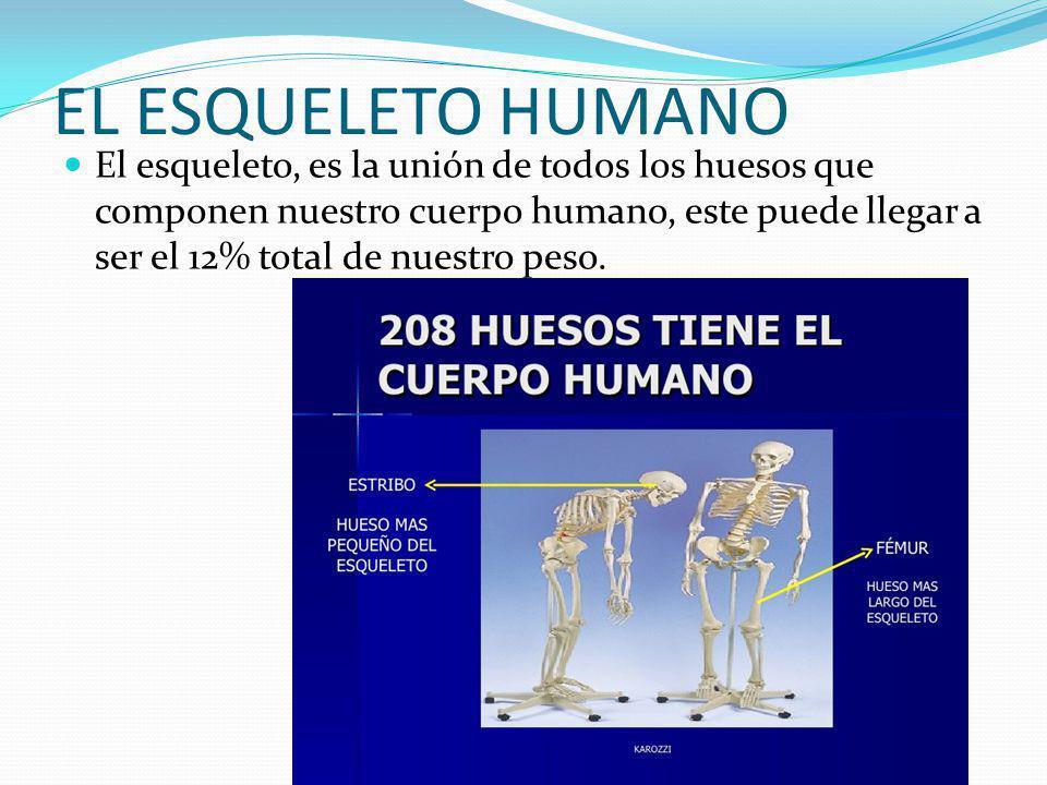 EL ESQUELETO HUMANO El esqueleto, es la unión de todos los huesos que componen nuestro cuerpo humano, este puede llegar a ser el 12% total de nuestro peso.