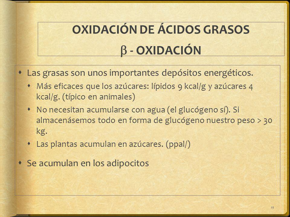 11 OXIDACIÓN DE ÁCIDOS GRASOS - OXIDACIÓN Las grasas son unos importantes depósitos energéticos. Más eficaces que los azúcares: lípidos 9 kcal/g y azú