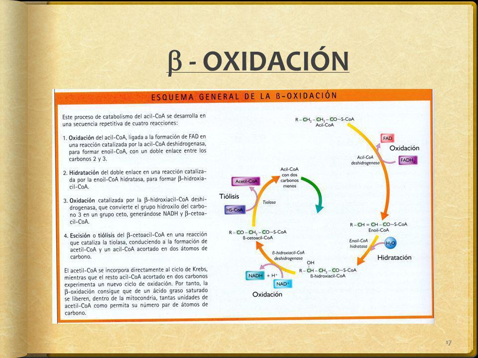 17 - OXIDACIÓN