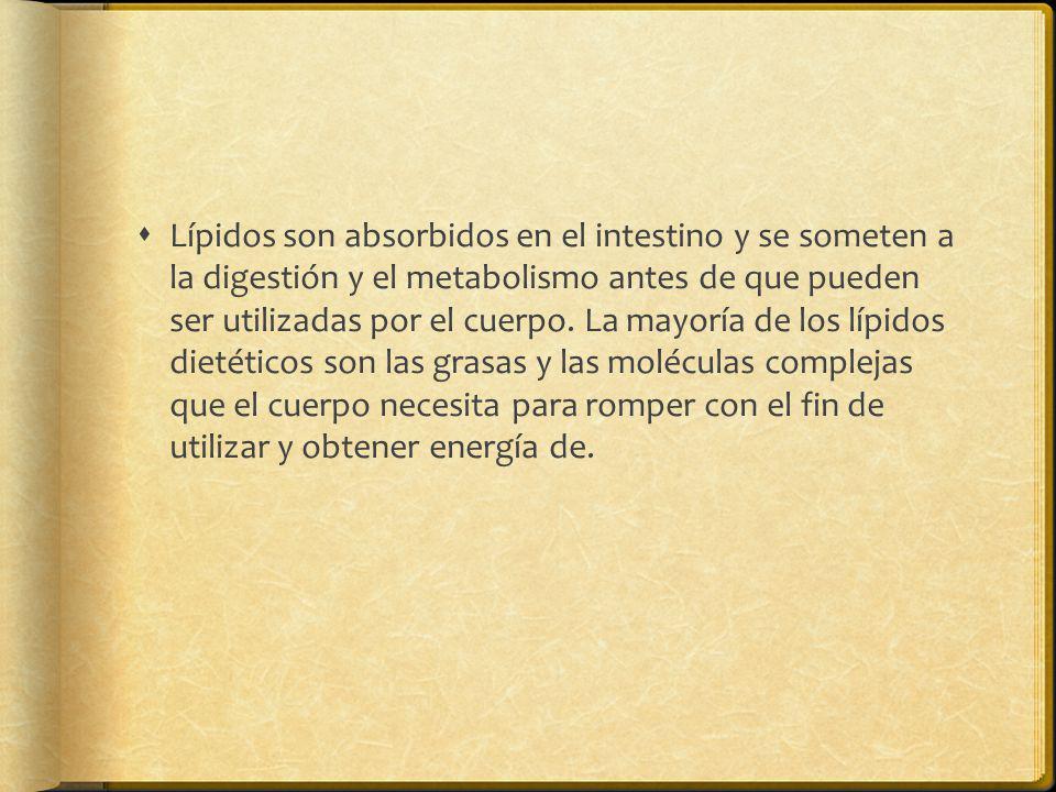 Lípidos son absorbidos en el intestino y se someten a la digestión y el metabolismo antes de que pueden ser utilizadas por el cuerpo. La mayoría de lo