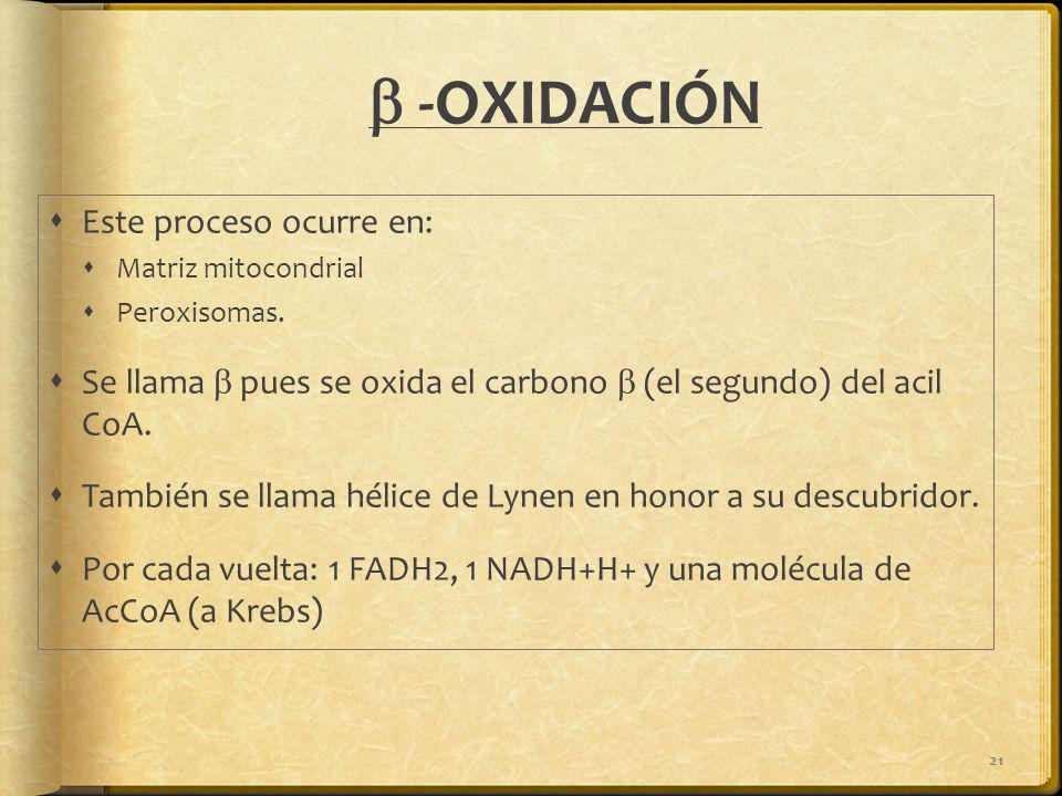 21 -OXIDACIÓN Este proceso ocurre en: Matriz mitocondrial Peroxisomas. Se llama pues se oxida el carbono (el segundo) del acil CoA. También se llama h