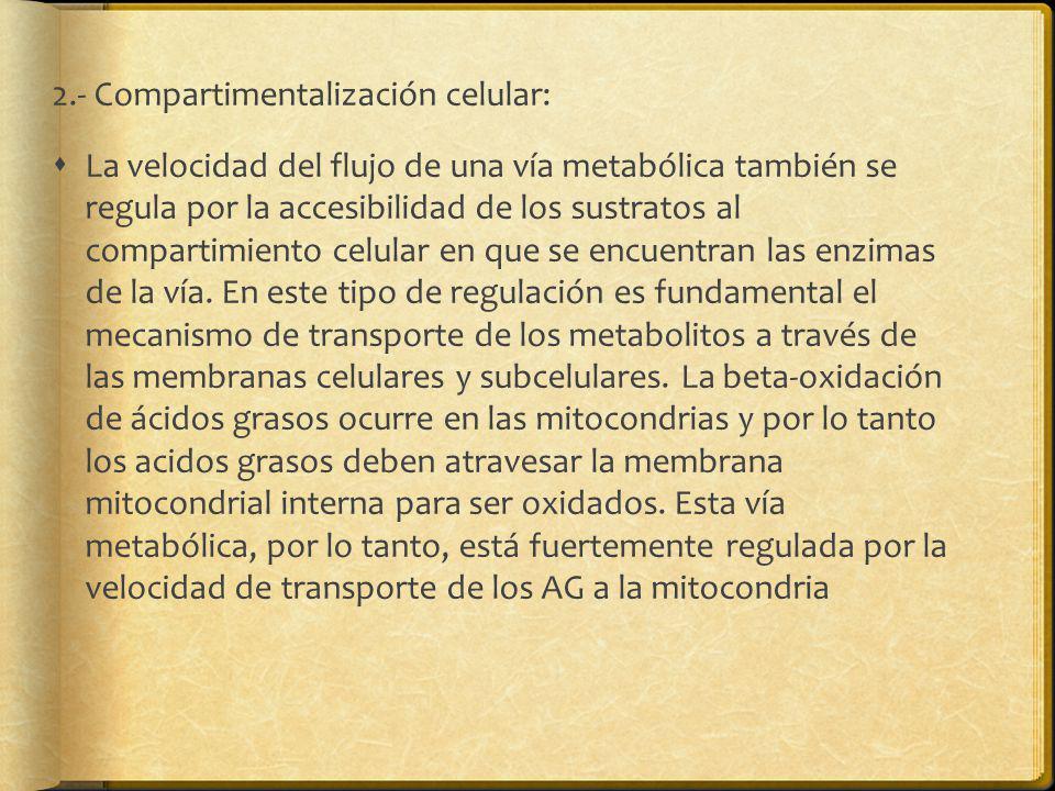 2.- Compartimentalización celular: La velocidad del flujo de una vía metabólica también se regula por la accesibilidad de los sustratos al compartimie