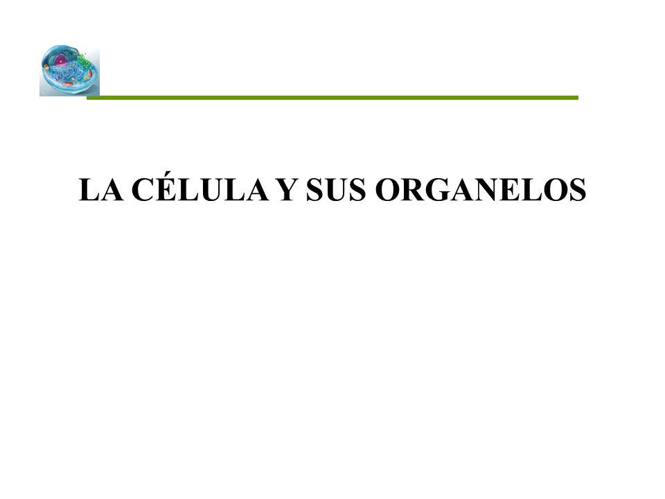 INTRODUCCIÓN La célula es la unidad estructural y funcional de los seres vivos.