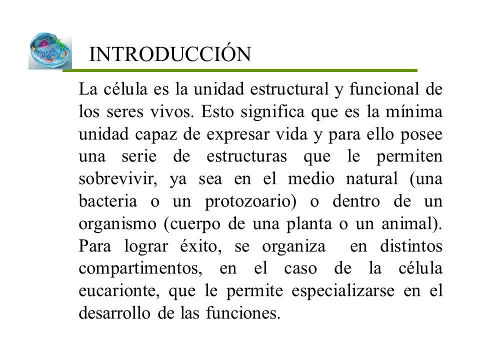 INTRODUCCIÓN La célula es la unidad estructural y funcional de los seres vivos. Esto significa que es la mínima unidad capaz de expresar vida y para e