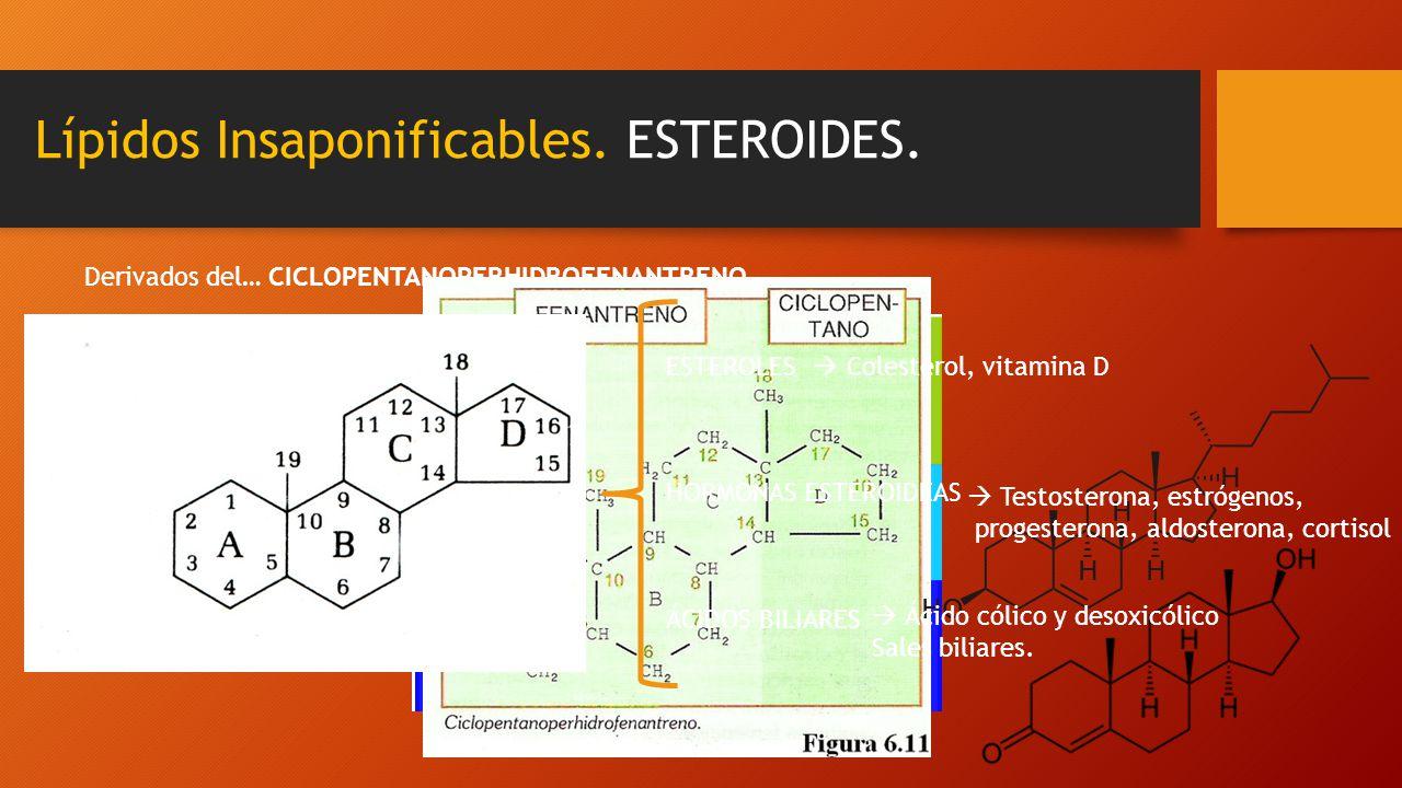 Lípidos Insaponificables. ESTEROIDES. Derivados del…CICLOPENTANOPERHIDROFENANTRENO ESTEROLES HORMONAS ESTEROIDEAS ÁCIDOS BILIARES Colesterol, vitamina