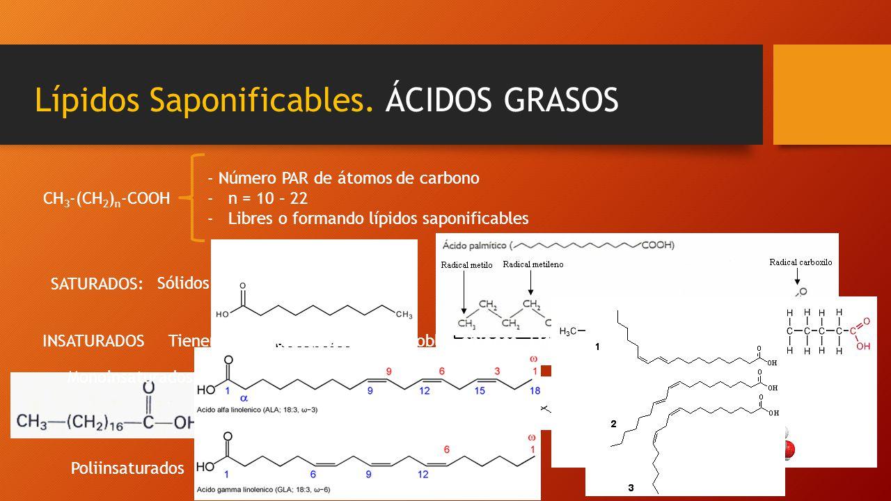 Lípidos Saponificables. ÁCIDOS GRASOS CH 3 -(CH 2 ) n -COOH - Número PAR de átomos de carbono -n = 10 – 22 -Libres o formando lípidos saponificables S