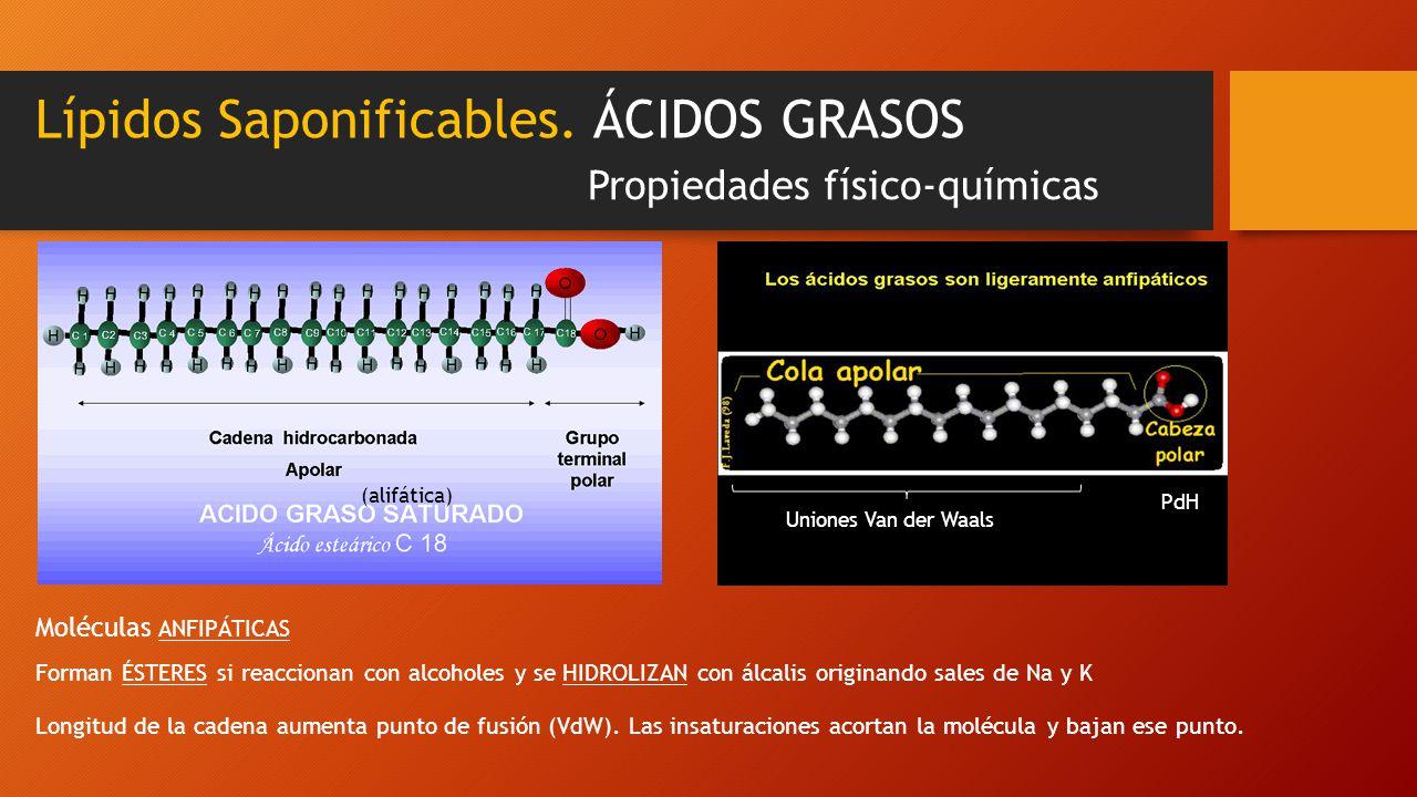 Lípidos Saponificables. ÁCIDOS GRASOS Propiedades físico-químicas (alifática) Uniones Van der Waals PdH Forman ÉSTERES si reaccionan con alcoholes y s
