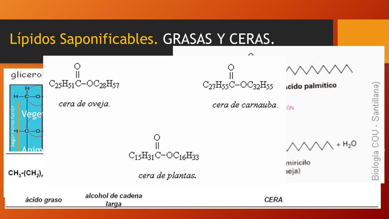 Lípidos Saponificables. GRASAS Y CERAS. Son ácidos grasos de cadena larga que se diferencian en el alcohol con el que se esterifican GRASAS : Acilglic