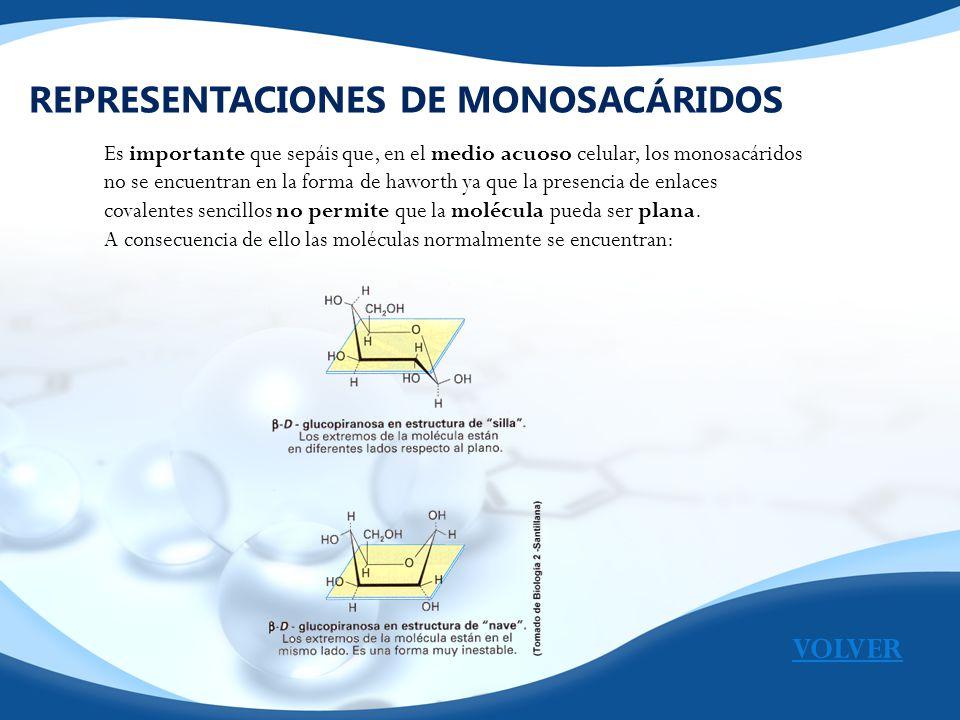 REPRESENTACIONES DE MONOSACÁRIDOS Es importante que sepáis que, en el medio acuoso celular, los monosacáridos no se encuentran en la forma de haworth