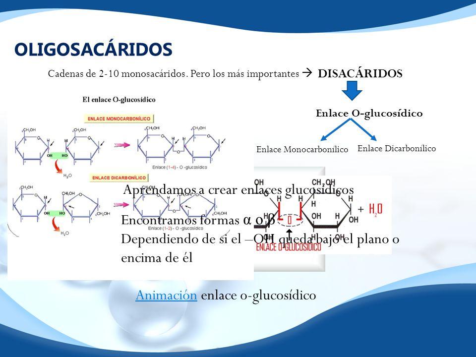 OLIGOSACÁRIDOS Cadenas de 2-10 monosacáridos. Pero los más importantes DISACÁRIDOS Enlace O-glucosídico Enlace Monocarbonílico Enlace Dicarbonílico Ap