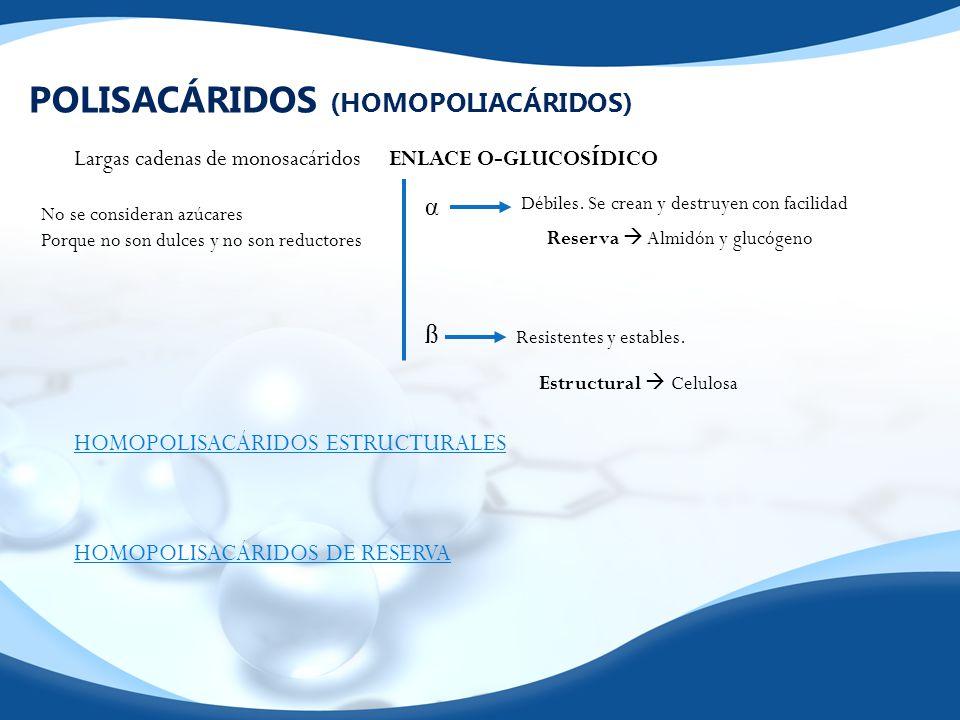 POLISACÁRIDOS (HOMOPOLIACÁRIDOS) Largas cadenas de monosacáridosENLACE O-GLUCOSÍDICO αßαß Débiles. Se crean y destruyen con facilidad Resistentes y es