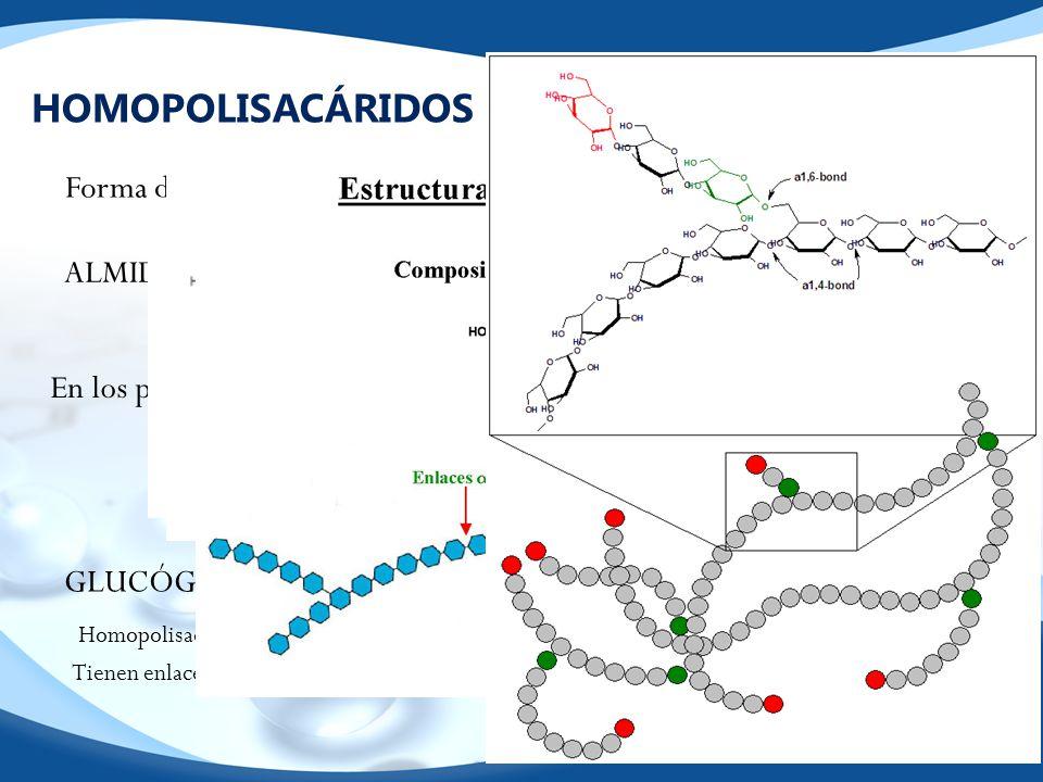 HOMOPOLISACÁRIDOS DE RESERVA ALMIDÓN GLUCÓGENO Forma de almacenar glucosa EVITANDO la presión osmótica.¿Por qué? Amilosa Amilopectina Cadenas larga α-