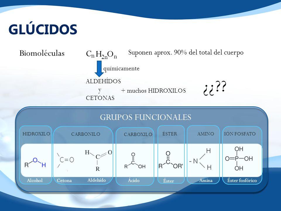 GLÚCIDOS Biomoléculas HO C n n 2n Suponen aprox. 90% del total del cuerpo químicamente ALDEHÍDOS y CETONAS + muchos HIDROXILOS ¿¿?? GRUPOS FUNCIONALES